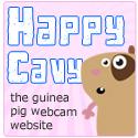 Guinea Pig Pet Webcam